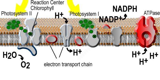 Department photoexcitable membranes ccuart Image collections