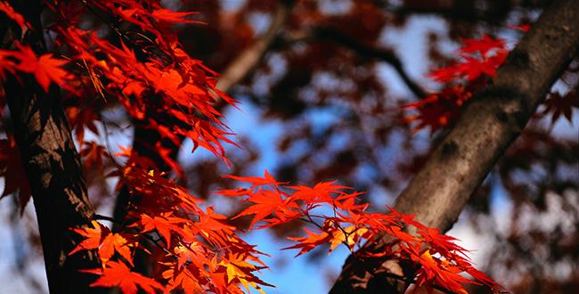 autumn-leaves_2017