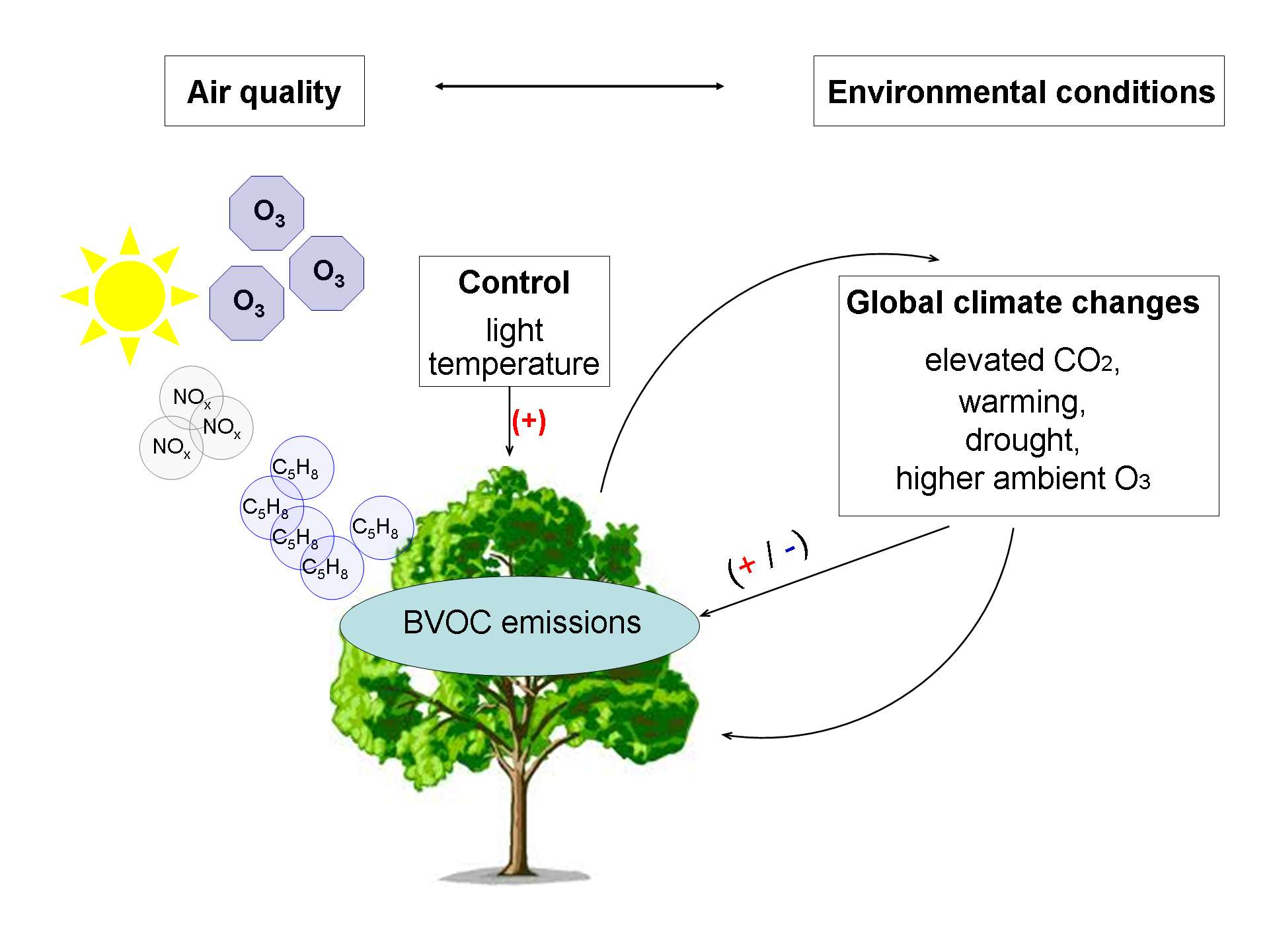 3 factors effecting photosynthesis Welcome to ICAR - t