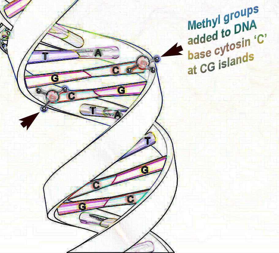 importance off dna typing Dna profiling is a way of establishing identity it is used in a variety of ways, such as establishing proof of paternity or finding out whether twins are fraternal or identical critics point out that dna profiles are vulnerable to contamination errors, and invasion of privacy.
